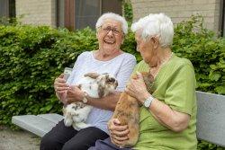 Hemelrijck - bewoners & konijnen